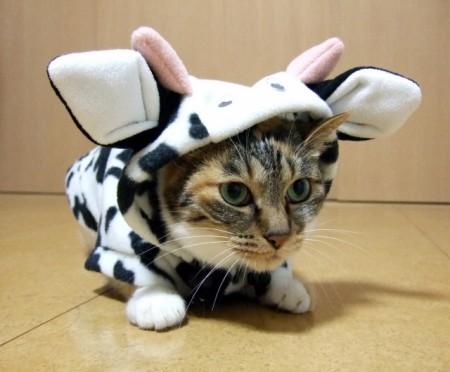 牛になった猫