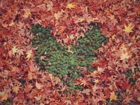 leaf_heart