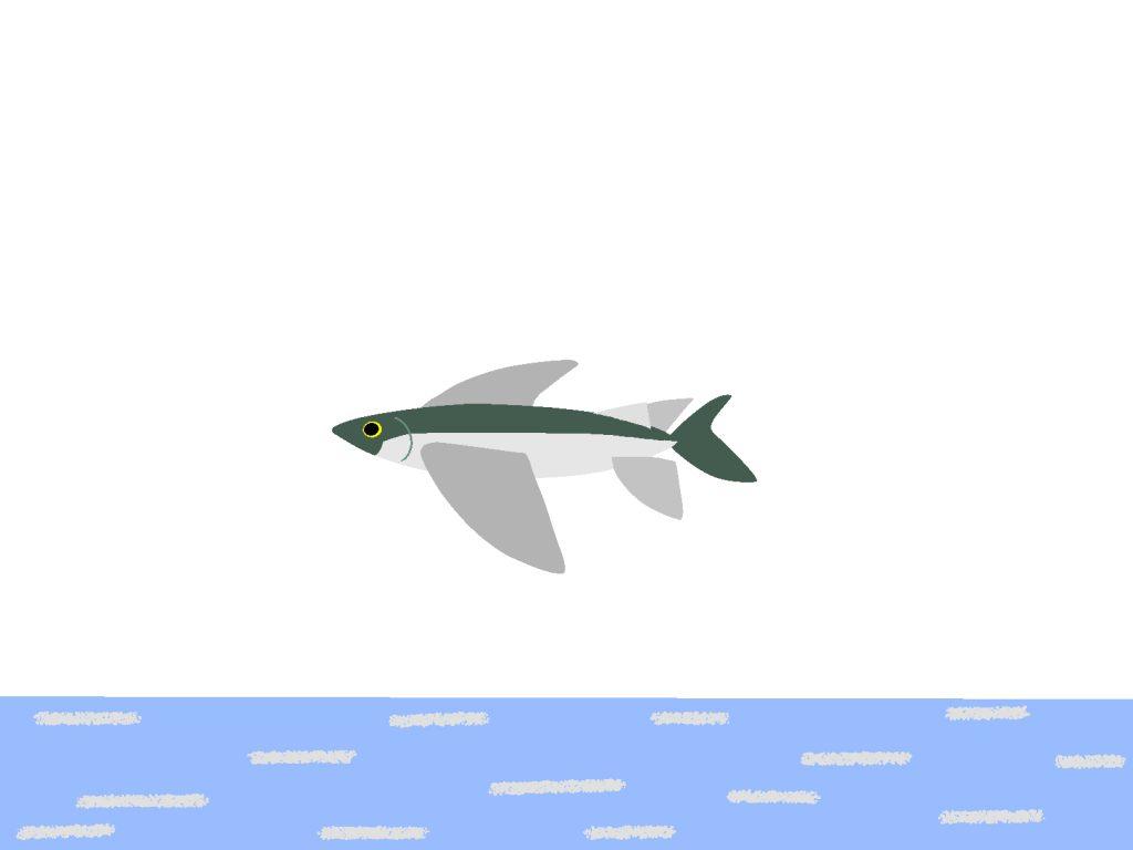 トビウオ海