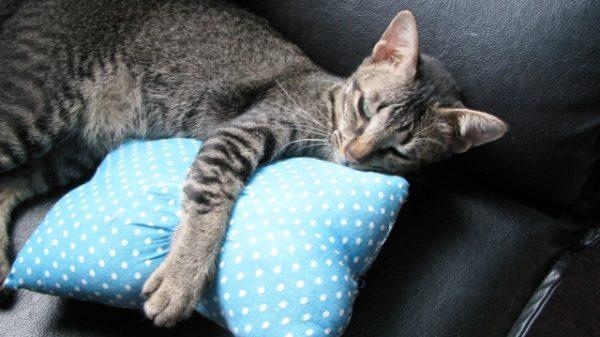 枕を抱く猫